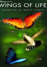 دانلود مستند Disneynature: Wings of Life 2011